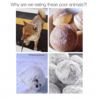 Animals, Boo, and Food: Why are we eating these poor animals?  @Rudecapybarav peta sup? You know who makes the best shiba Inu fried balls? My boo @BadtasteBB follow her cuz she's my sweet sweet beebee @badtastebb @badtastebb @badtastebb @badtastebb clearly she has good taste in food 😂 . animalrights animalrightsactivist savetheanimals saveanimals animalwelfare animalsarefriends notfood donutsareourfriends dont eat donuts