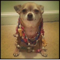 Memes, Mardi Gras, and 🤖: Why are you looking at me like that mom?   Its Mardi Gras and I am displaying my beads...I earned them!  How did I earn them?   I did things...  Things I am not proud of...  I showed some leg..  Shook some booty...   But don't they look good on me?   Now if you will excuse me I must go take a shower and wash the shame away for the things that I have done.   *****Runs into bathroom and slams door*****  *****Opens door and yells*****   What happens at Mardi Gras....stays there!   Goodnight Pack...I love you all!