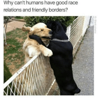 Why can't humans have good race  relations and friendly borders? Yeah why cant we america😑 games lol funny gaming dank meme dankmemes lit like4like ftw games videogames friends elgato youtube battlefield1 best memes dope youtube fallout like share love memes humor dankmemes callofduty bye like comment comedian lmao followme hot