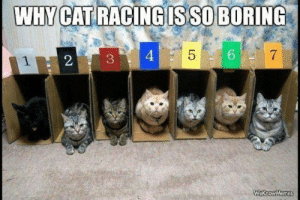 racing: WHY CAT RACING IS SO BORING  5  4  7  WeknowMemes