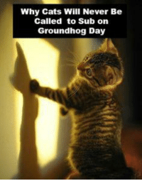 How many more weeks of winter?: Why Cats Will Never Be  Called to Sub on  Groundhog Day How many more weeks of winter?
