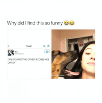"""Me: Why did I find this so funny  Tweet  Sky  @sky Baby xo  """"ARE YOU PETTING OTHER BITCHES YES  OR NO""""  @masturwate Me"""