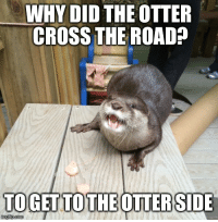 Introducing: Terrible Joke Otter: WHY DID THE OTTER  CROSS THE ROAD  TOGETTO THE OTTERSIDE  mg lip com Introducing: Terrible Joke Otter