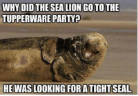 Memes, Tupperware, and Beastly: WHY DID THE SEALIONGOTOTHE  TUPPERWARE PARTY?  HE WAS LOOKING FOR ATIGHTSEAL ~Beast~