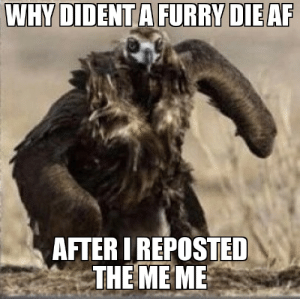 The post was a lay Shm (shake my head) 😡😡😡😤😤: WHY DIDENT A FURRY DIE AF  AFTER I REPOSTED  THE ME ME The post was a lay Shm (shake my head) 😡😡😡😤😤