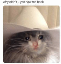 yee: why didn't u yee haw me back