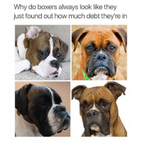 What a sad dog: Why do boxers always look like they  just found out how much debt they're in  Shithead What a sad dog