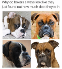 Check out @shitheadsteve if you like memes: Why do boxers always look like they  just found out how much debt they're in Check out @shitheadsteve if you like memes