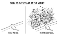 Memes, 🤖, and Cat: WHY DO CATS STARE AT THE WALL?  WHAT WE SEE  WHAT THE CAT SEES. Silly cat.