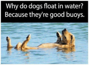 Dogs, Omg, and Tumblr: Why do dogs float in water?  Because they're good buoys. omg-humor:  Good buoys