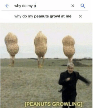 Peanuts, Why, and This: why do my p  X  why do my peanuts growl at me  X  [PEANUTS GROWLING] This pleases the n u t