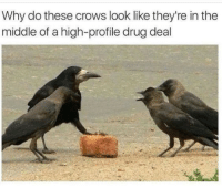 Why so serious.: Why do these crows look like they're in the  middle of a high-profile drug deal Why so serious.