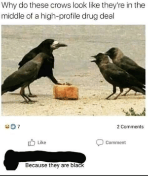 Aight, you got the crumbs?: Why do these crows look like they're in the  middle of a high-profile drug deal  2 Comments  Like  Comment  Because they are black Aight, you got the crumbs?