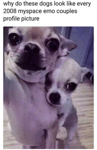 Dogs, Emo, and MySpace: why do these dogs look like every  2008 myspace emo couples  profile picture