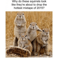 Funny, Mixtapes, and Squirrel: Why do these squirrels look  like they're about to drop the  hottest mixtape of 2015?