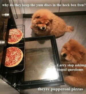 Animals, Funny, and Memes: why do they keep the yum discs in the heck box fren?  Larry stop askimg  Stopid questioms  theyre pupperoni pizzas 42 Funny Dog Memes That'll Make Your Day! - Lovely Animals World