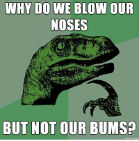 Blow, Why, and Made: WHY DO WE BLOW OUR  NOSES  BUT NOT OUR BUMS  made on imqur bumblowers the lot of us