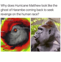 like my recent on @j.balconi to be noticed: Why does Hurricane Matthew look like the  ghost of Harambe coming back to seek  revenge on the human race?  Guantanamo  Port-au-Prince  ngston like my recent on @j.balconi to be noticed