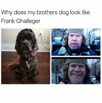 Funny, Meme, and Dog: Why does my brothers dog look like  Frank Ghalleger @funny is the funniest account on ig🤣