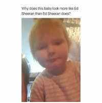 IM LAUGHING: Why does this baby look more like Ed  Sheeran than Ed Sheeran does? IM LAUGHING