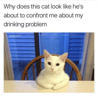 Memes, 🤖, and Cat: Why does this cat look like he's  about to confront me about my  drinking problem  Cadabmoms