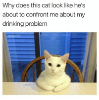 Drinking, Memes, and 🤖: Why does this cat look like he's  about to confront me about my  drinking problem  @dabmoms Have a seat.... 😾 (Rp @dabmoms is about to reach 200k followers! Go follow @dabmoms 👈)