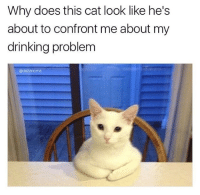 Drinking, Memes, and Moms: Why does this cat look like he's  about to confront me about my  drinking problem  odabmoms Dab Moms
