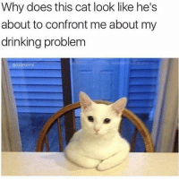Drinking, Funny, and Tequila: Why does this cat look like he's  about to confront me about my  drinking problem  @dabmoms It has come to my attention that last night you had 15 shots of tequila and puked in my litter box. It's time Sharon- it's time.