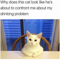 Dank, Drinking, and 🤖: Why does this cat look like he's  about to confront me about my  drinking problem  @dabmoms