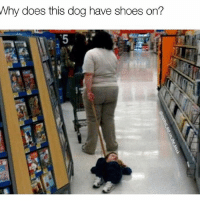 Memes, Shoes, and Smh: Why does this dog have shoes on? Damn son. This is why you need a shock collar smh. Follow my girl @rudecapybara for all of your animal needs @rudecapybara @rudecapybara @rudecapybara
