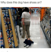 Dogs, Memes, and Shoes: Why does this dog have shoes on? Dogs with shoes are so hot right now | 👉 @coolest_kid_on_the_block for more