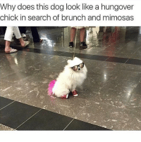 """Need eggs benny- Literally dying rn"": Why does this dog look like a hungover  chick in search of brunch and mimosas ""Need eggs benny- Literally dying rn"""