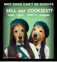 EPISODE #616 DOG SCOUTS Happy Birthday Girl Scouts!: WHY DOGS CAN'T BE SCOUTS  SELL our COOKIES??  Yeah, right... THAT'LL happen  SOFA  GS EPISODE #616 DOG SCOUTS Happy Birthday Girl Scouts!