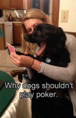 No Poker Face: Why dogs shouldn't  play poker. No Poker Face