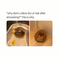 "Bitch, Hair, and Girl Memes: ""why dont u blow dry ur hair after  showering?"" this is why exam szn bitch u mad bro? get mad!!"
