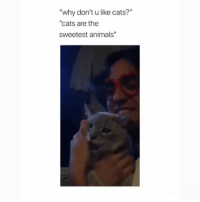 """Animals, Cats, and Memes: """"why don'tu like cats?""""  """"cats are the  sweetest animals'"""""""