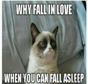"Fall, Love, and Memes: WHY FALL IN LOVE  WHEN YOU CAN FALL ASLEEP ""Why fall in love when you can fall asleep?""  #grumpycatmemes #ripgrumpycat #memes"