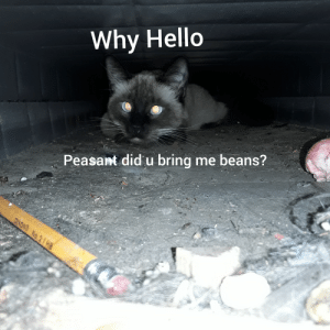 Hello, Peasant, and Cat: Why Hello  Peasant did u bring me beans?  DIXON No.2/HB I serve my cat