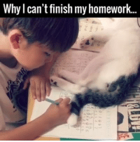 Memes, Homework, and 🤖: Why I can't finish my homework. cats need attention like me