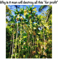 Memes, Trees, and 🤖: Why is it man will destroy all this for profit  chakabars When the last tree is chopped down we will realise that we can't eat money...