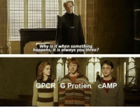 Memes, Michael, and 🤖: Why is it when something  happens, it is always you thřee?  GPCR G Protien cAMP Credit: Michael Yoon