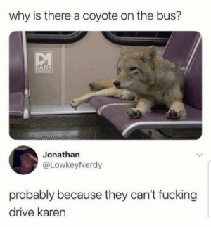 Mind your own damn business Karen. via /r/memes https://ift.tt/2E5eomi: why is there a coyote on the bus?  DANK  EMICLOGY  Jonathan  @LowkeyNerdy  probably because they can't fucking  drive karen Mind your own damn business Karen. via /r/memes https://ift.tt/2E5eomi