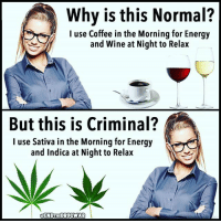 Energy, Facebook, and Memes: Why is this Normal?  I use Coffee in the Morning for Energy  and Wine at Night to Relax  But this is Criminal?  I use Sativa in the Morning for Energy  and Indica at Night to Relax  FENDTHEDRUCWMAR 💭 Seems kinda hypocritical, don't you think? 💭🤔🤔🤔💭 Join Us: @TheFreeThoughtProject 💭 TheFreeThoughtProject 💭 LIKE our Facebook page & Visit our website for more News and Information. Link in Bio... 💭 www.TheFreeThoughtProject.com