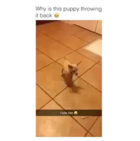 Makeup, Memes, and Puppy: Why is this puppy throwing  it back  I hate him a Comment below Tag a Friend Spam @teengirlsquaad_ with likes . . . . . . . . . . . . . . . makeup makeupaddict makeupjunkie 💄 makeupartist makeupforever makeupgeek makeupmafia eyebrowsonfleek eyebrows eyebrowsdid ootd wavyhair