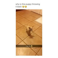 Funny, Lazy, and Lmao: why is this puppy throwing  it back  I hate him i need to workout but i'm soo lazy Follow me (@whoaciety) for more 💓 - - - - - [tags: textpost textposts wtftumblr funnytumblr tumblrlol tumblrtextpost tumblrtextposts tumblr funnytextpost funnytextposts tumblrfunny ifunny relatable relatabletextpost rt slime relatablepost asmr 314tim meme lmao shrek spongebob trickshot 😂 pepe textpostaccount cohmedy funny satan ]
