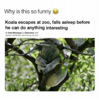 cnn.com, Funny, and Animal: Why is this so funny  Koala escapes at zoo, falls asleep before  he can do anything interesting  By Cheri Mossburg and Dana Ford, CNN  daned 7 58 AM EST, Wed February 26,2014 This koala is my spirit animal