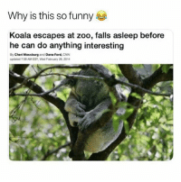cnn.com, Funny, and Memes: Why is this so funny  Koala escapes at zoo, falls asleep before  he can do anything interesting  By Cheri Mossburg and Dana Ford, CNN  dae 7 58 AM EST,Wed February 26, 2014 @hilarious.ted posts the cutest memes!!