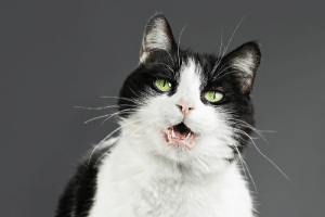 Why Is Your Cat Whining? - Catster: Why Is Your Cat Whining? - Catster