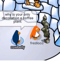 Jfc Fred  Source: @clubpenguinruined (Instagram): why is your only  decoration a coffee  plant  fredloco  COWbelly Jfc Fred  Source: @clubpenguinruined (Instagram)