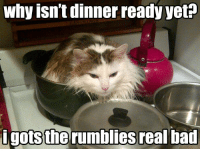 """<p><a href=""""https://omg-images.tumblr.com/post/171570436252/the-rumblies"""" class=""""tumblr_blog"""">omg-images</a>:</p>  <blockquote><p>The rumblies</p></blockquote>: why isn't dinner ready yett  igotsthe  rumblies realbad <p><a href=""""https://omg-images.tumblr.com/post/171570436252/the-rumblies"""" class=""""tumblr_blog"""">omg-images</a>:</p>  <blockquote><p>The rumblies</p></blockquote>"""